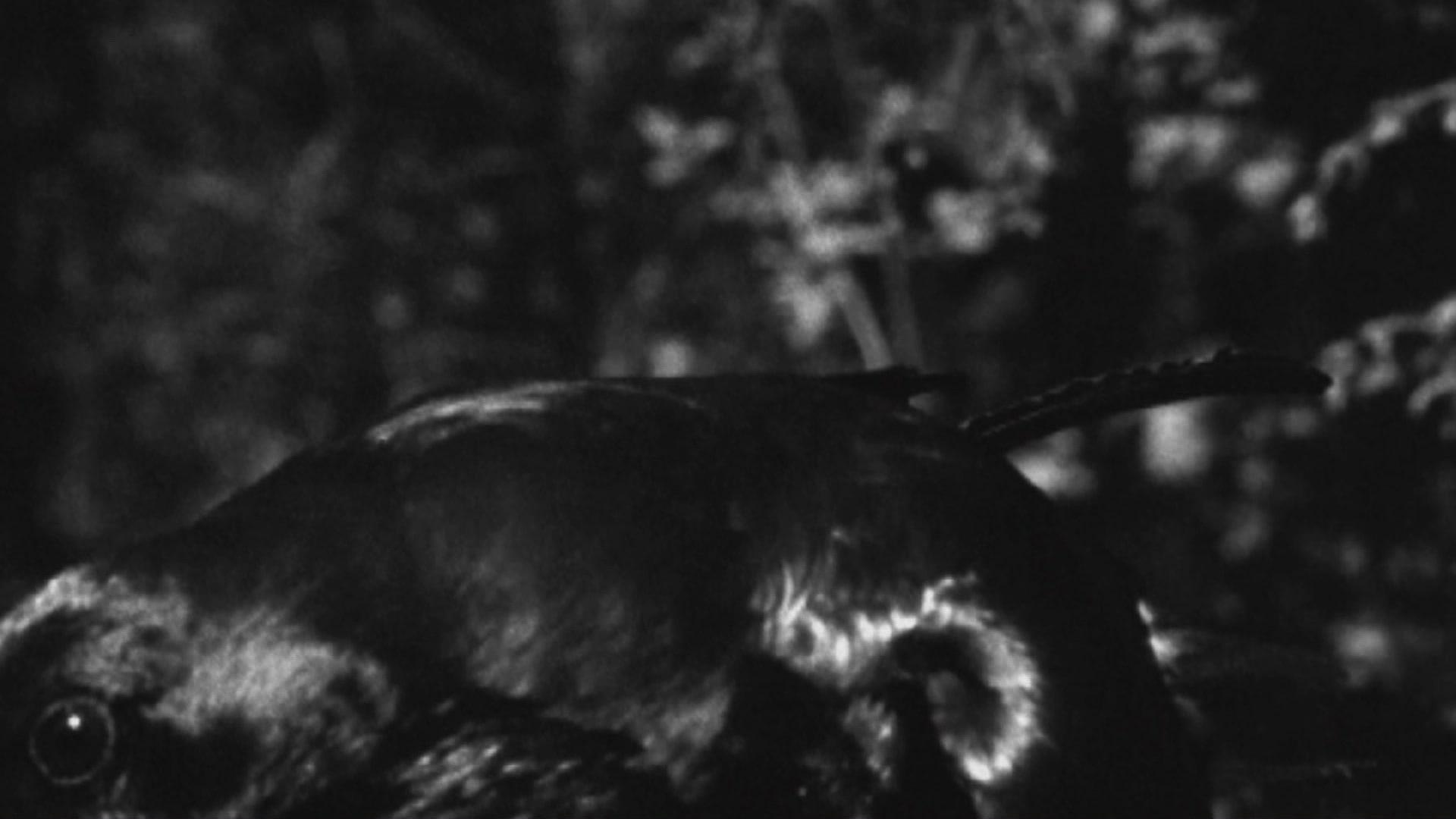 Peter Conrad Beyer LE RÊVE // dt. DER TRAUM Experimentalfilm, 8:30 min, Super 16mm/DSLR, Farbe und S/W, Sound/Stereo, Deutschland 2019